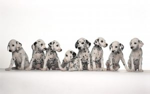 cute-baby-dog-wallpaper